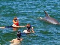 Juego con mamiferos marinos
