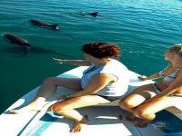 Observacion de delfines