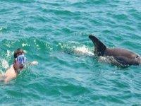 Sumergirte con los delfines