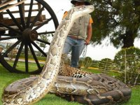 Serpiente rambo