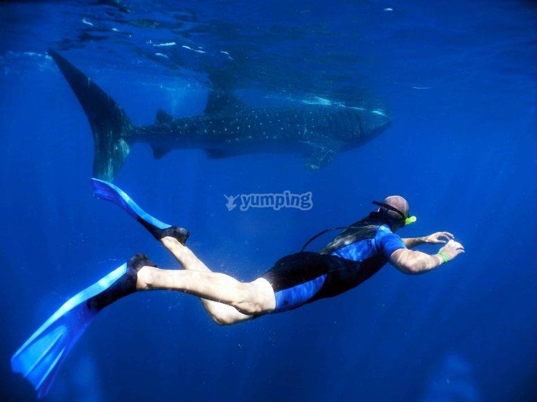 Nada junto a impresionantes especies marinas
