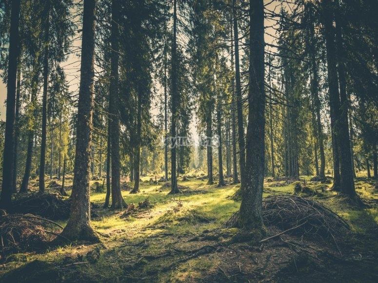 Ruta en el bosque de valle de bravo
