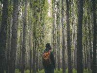 Recorrido en el bosque