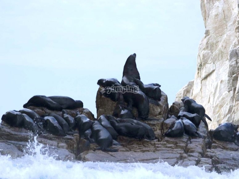 Reserve of seals and sea lions