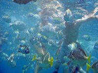 Practice Snorkeling in the Sea of Cortes