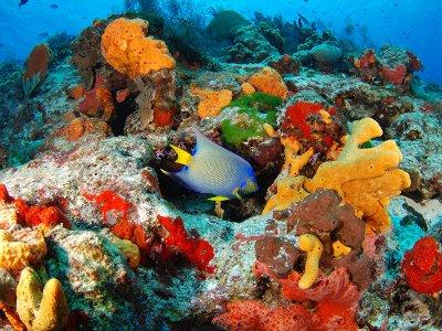 Ruta de snorkel  para niños en la Riviera Maya 7 h