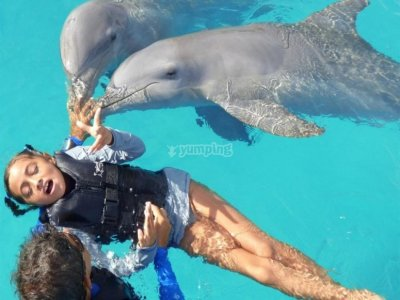 Dolphin therary session in Guanajuato
