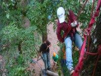 Tree descents