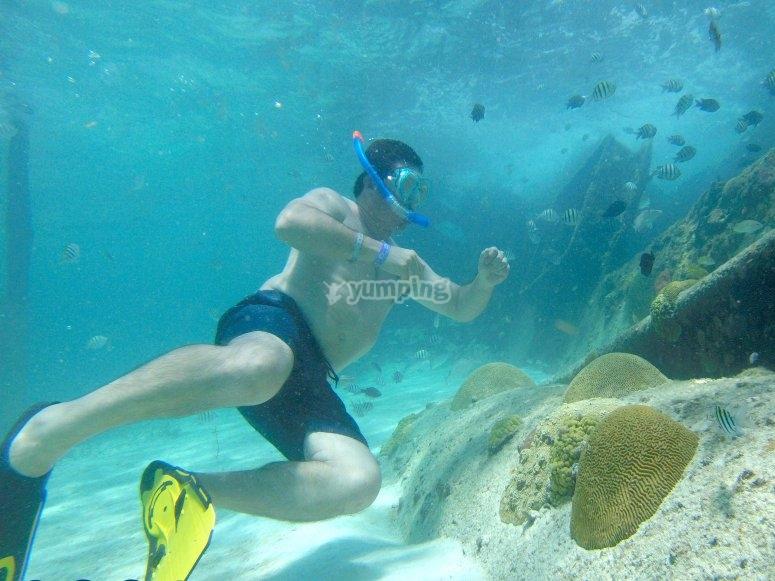 Bajo el agua entre peces