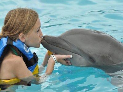 Dolphin swimming, zip-line, snorkel Riviera Maya