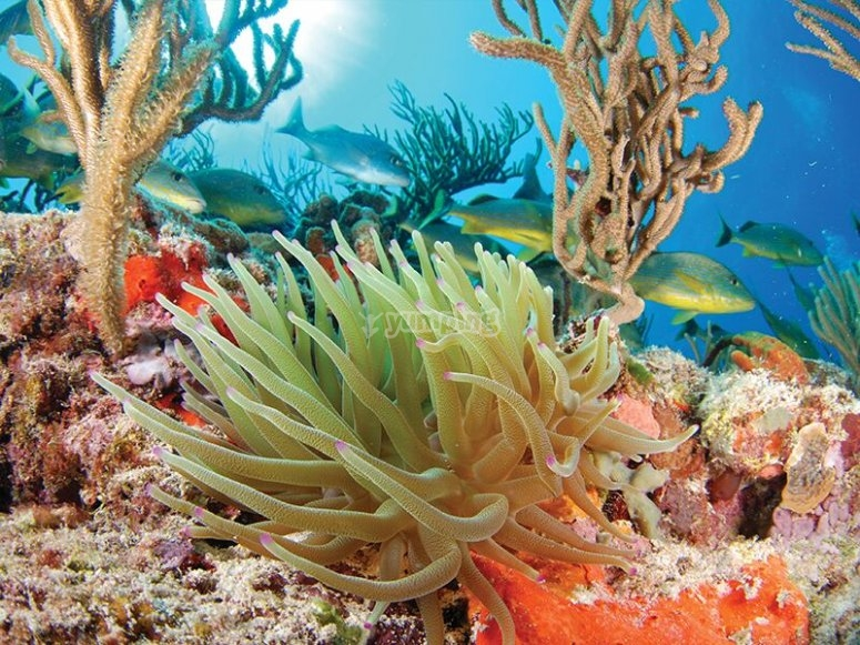 The Caribbean marine ecosystem