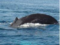 Tour de encuentro con cetaceos