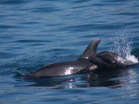 amigos delfines