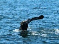 colas de ballenas