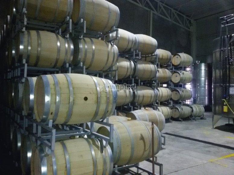Las barricas del viñedo