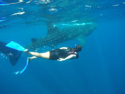 Swimming with whale shark and lunch in Cancún