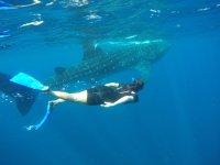 Nada con tiburón ballena y almuerzo en Cancún