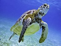 Swim with turtles and lagoon discovery in Tulum
