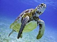 Nada con tortugas y descubre cenotes en Tulum