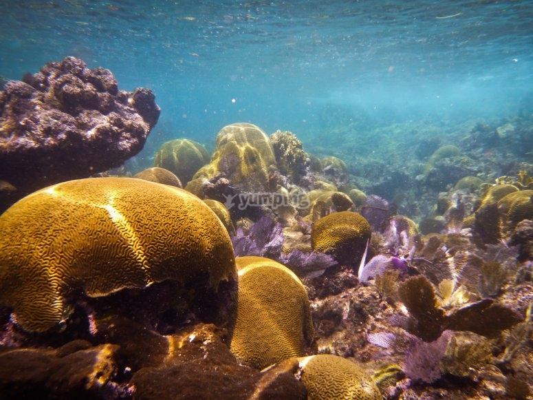 Nadar arrecife isla contoy