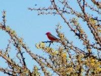 Aves en la Trini