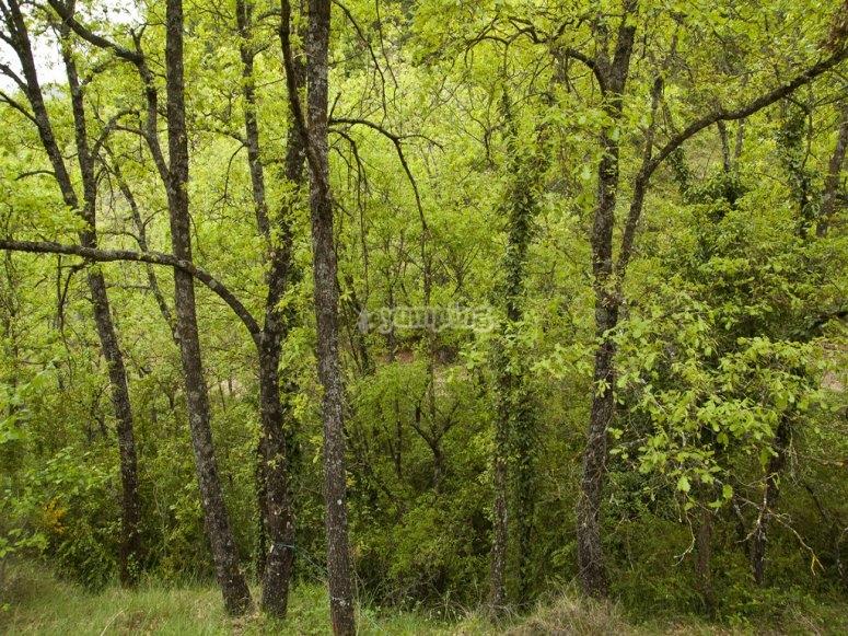 Bosque Tapalpa