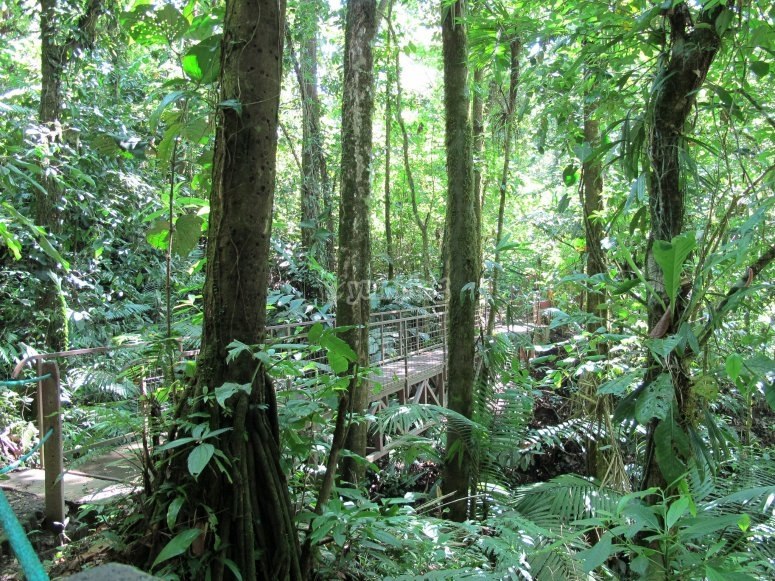 Disfruta del bosque Tapalpa