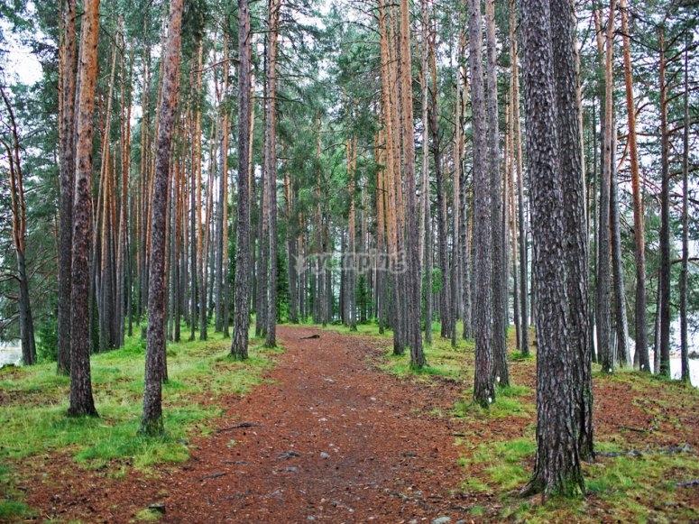 En el bosque de Tapalpa