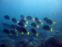Triopical fish