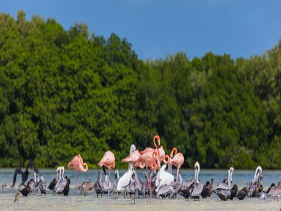 Lagoons and flamingos tour of Isla Holbox 1 day
