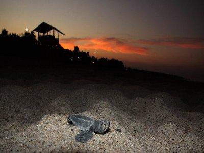 Night turtles sighting tour in Riviera Maya