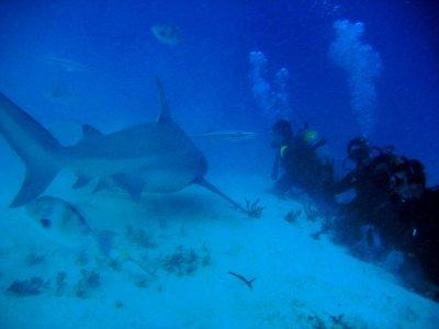 Scuba-diving with bull shark in Playa del Carmen