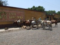 Horseback riding from casa herradura