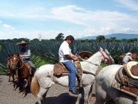 Horseback riding through blue agave fields