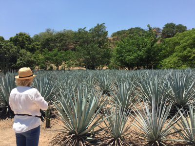 Private tour in the Tequila Valley 3 days