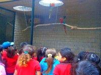 Parrot pavilions