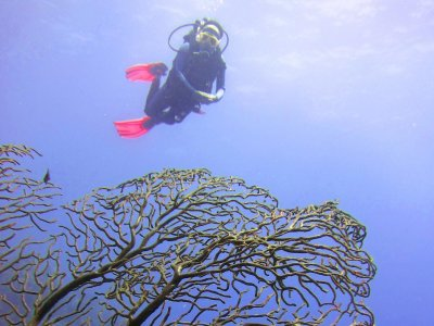 Diving course with immersions in Chetumal 5 days