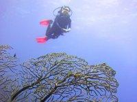 Buceando en el mar Caribe