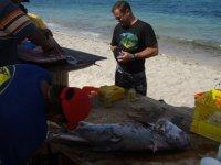 Lo que pescamos