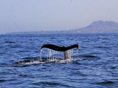 Vista Paraiso Tours and Activities Whale Watching