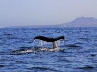 La cola de las ballenas