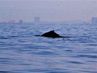 Disfruta de las ballenas