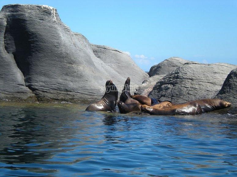 Buceando en Isla Coronado