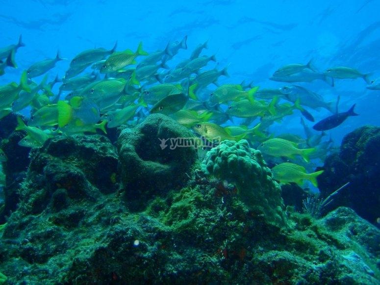 Conociendo los animales marinos a traves del buceo