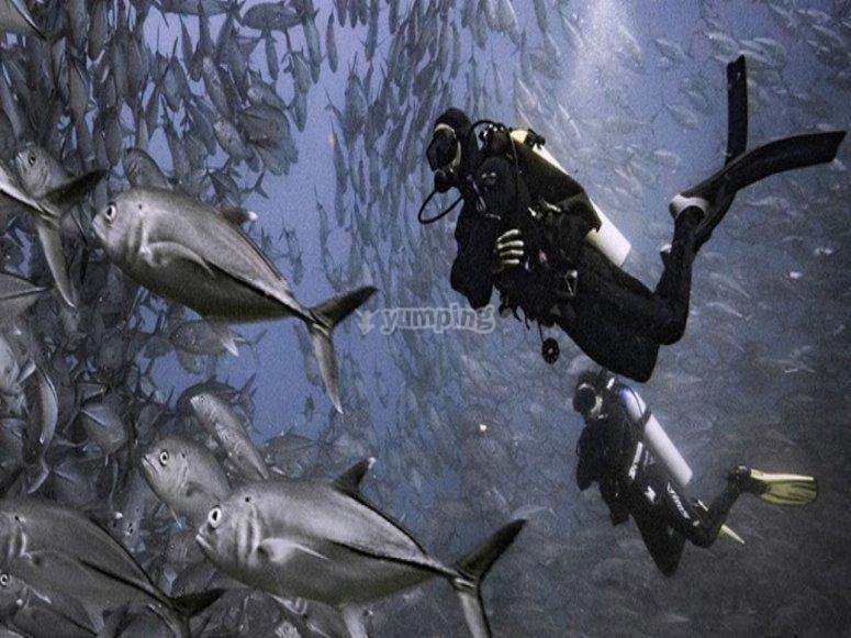 Disfrutando de las profundidades en Veracruz