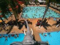 Pools with elephant