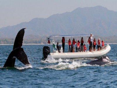 Vallarta Adventures Whale Watching
