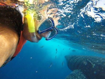 Nado con Tiburón Ballena desde Playa del Carmen