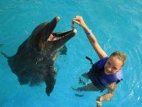 Alimentando a un mamifero acuatico