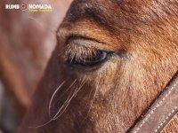 Horse fourteen